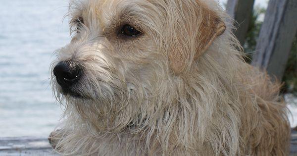 Our Angels Dog Rescue Petfinder