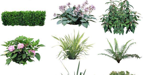 Plants in psd arquitectura chiquita beb for Plantas paisajismo