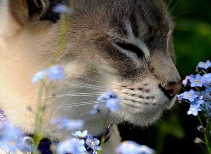 Cat in Blue Flowers