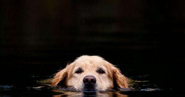 Dog - lovely photo