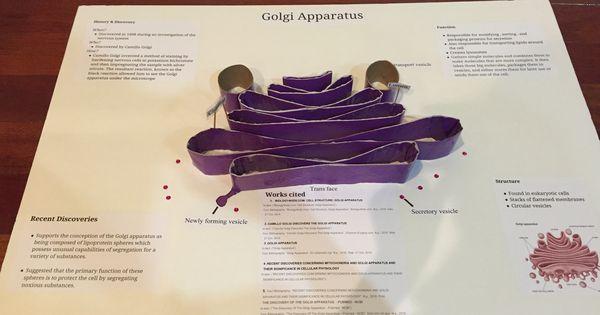 Golgi Apparatus Project | Golgi Apparatus Project | Pinterest