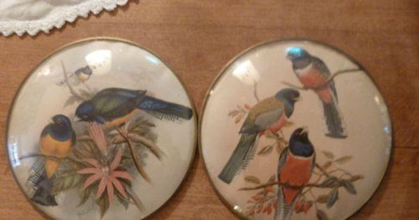 Set Of 2 Convex Antique Bird Prints Peter Watson Studio