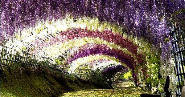 Wisteria Tunnel is located at the Kawachi Fuji Gardens in Kitakyushu, Japan.