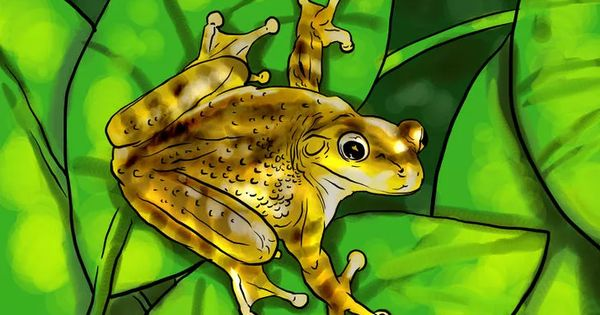 How To Get Rid Of Frogs Around The Pool