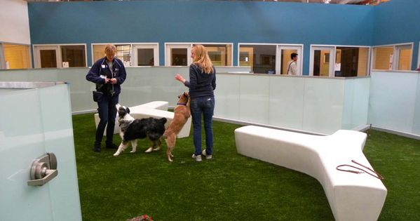 How To Start An Indoor Dog Park Top Dog Tips Indoor Dog Park Dog Playground Dog Park Design