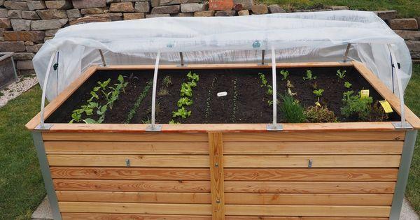 Gurken Im Topf Anbauen Tomaten Garten Garten Gurken Anbauen