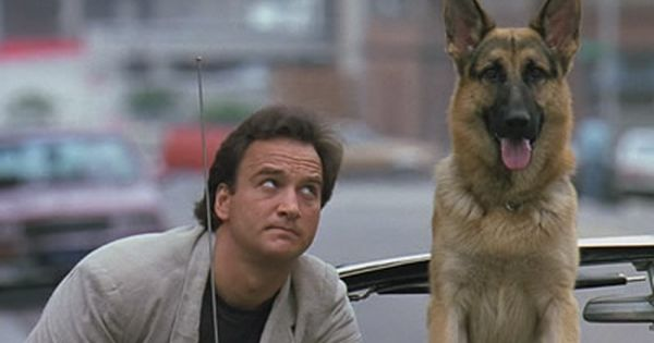 Dogs In Movies Jerry Lee Real Name Rando The German Shepard In