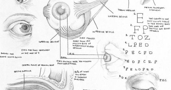 crack propagation diagram of the ear