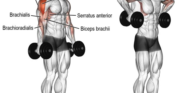Dumbbell armpit row. A compound pull exercise. Muscles ...