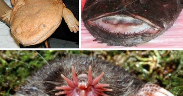 The 9 Strangest Animals On Earth Webecoist Weird Animals Unusual Animals Bizarre Animals