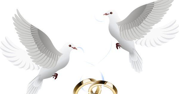 7ccb92df717a89b6a5fa60ce3fbd4056 Png ٨٠٠ ٥١٠ Pixels Wedding Doves Tattoo Wedding Rings Wedding Rings
