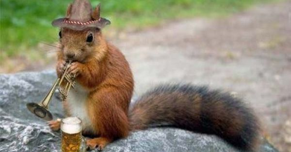 Funny squirrel pictures animal funny squirrels new - Funny squirrel backgrounds ...