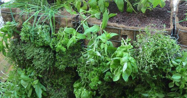 muret vegetal de plantes aromatiques photos et salons. Black Bedroom Furniture Sets. Home Design Ideas
