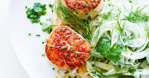 Seared scallops, Fennel and Scallops on Pinterest