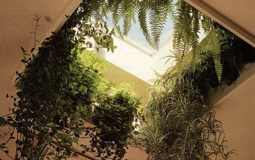 Skylight Plants Porch Bathroom Conservatory Bedroom On