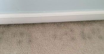 08f23433fa62f3efc1778bdb078fd5c8 - How To Get Rid Of Mold Out Of Carpet