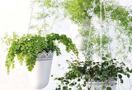 Vida al aire libre las flores en verano ikea macetas y - Plantas ikea naturales ...