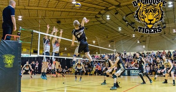 Ethan Boyd To Join Tigers Volleyball Squad For The 2018 19 Season Mens Volleyball Volleyball Squad