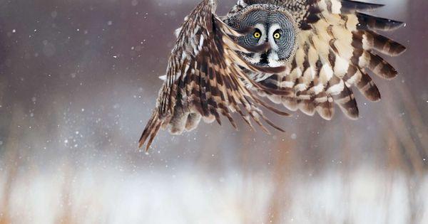 #beautiful photography animals owl nature