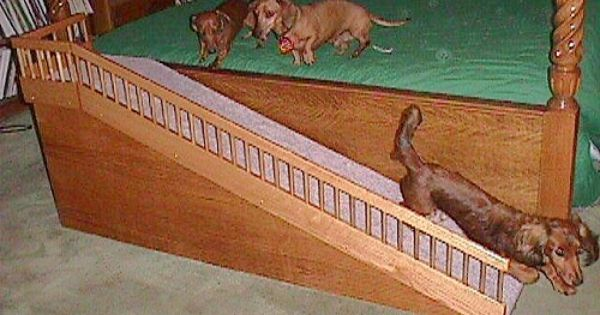 Great Ramp For Pets With Limitations Critter Corner Pinterest