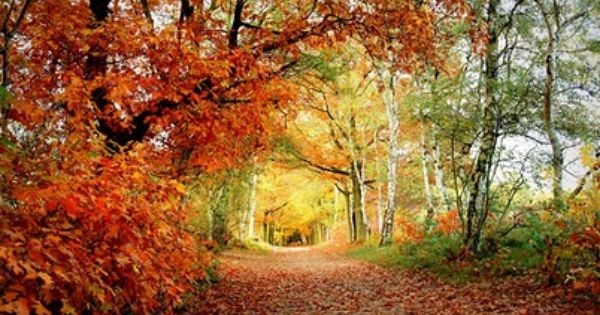 Pin By Christian Dumoulin On Nature En Automne Nature Photo Wallpaper Nature Wallpaper Autumn Trees