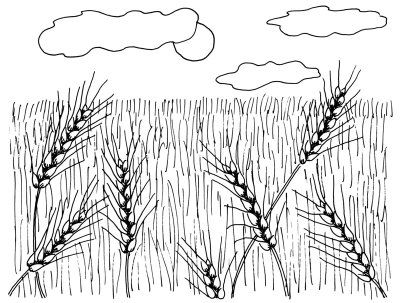 How To Draw Wheat Fields In 4 Steps Drawings Wheat Drawing