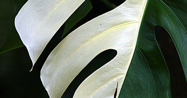 Semi Albino Fern Green Nature And Fern