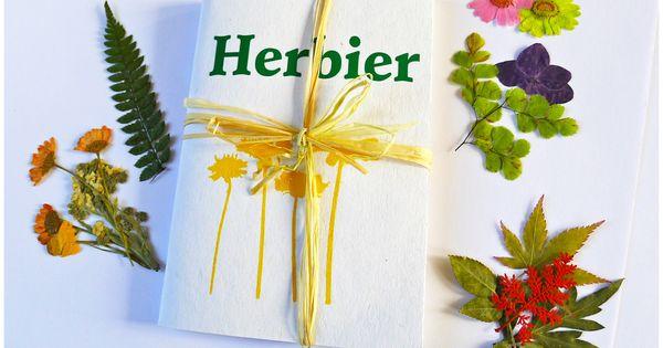 Faire un herbier avec les enfants botanique pinterest herbier enfants et faire - Faire un herbier ...