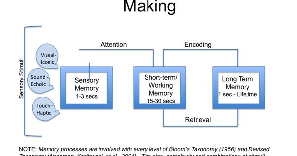 multi store model The multi store model of memory is useful as it suggests that memory is made up of short-term and long-term stores this seems to fit with most people's notion of what memory is, with separate stores that are different in terms of capacity, duration and encoding.