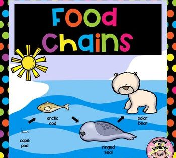 Food Chains Food Chain Teaching Comprehension Science Lessons Elementary