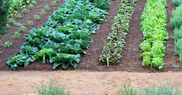 Monticello Vegetable Garden...the ultimate kitchen garden! Beautiful pictures of it here, accompanied
