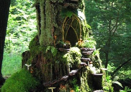 moss fairy house. This is like my dream tree house!