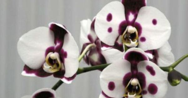 Orchids For Sale Orchids Flowers Flower Images