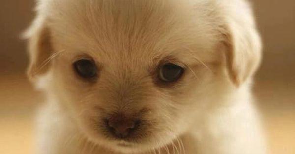 Cute, cute, puppy, puppy, puppy. Cutest. Puppy. Ever.