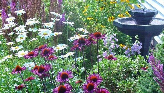 perennial garden ideas | Beauty of Perennials Purple coneflower, daisies, foxglove, black-eyed