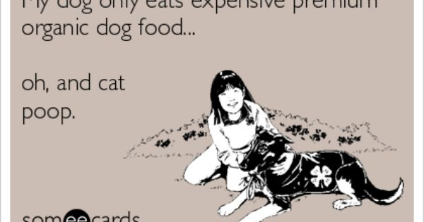 46++ Why does my dog only eat when i m around ideas in 2021