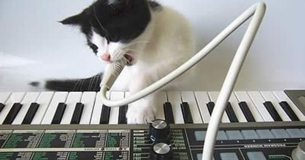Josh The Synth Kitty Funny Animals Cats Funny Pictures