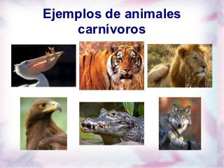 Carnivoros Herviboros Omnivoros Animales Carnivoros Animales Herbívoros Clasificación De Animales