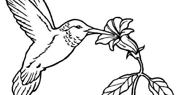 Hummingbirds Flowers Provide Nectar For Hummingbird To