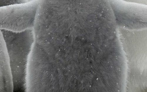 Baby Penguin-- hug time!