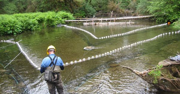 Net Pen To Hold Koi In A Mud Pond Our Aquaculture Netting Solutions Are Used By Fish Hatcheries Fish Farms And Aquaculture Fish Farming Fish Hatchery