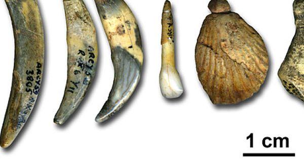 Proteinanalyse Neandertaler Stecken Hinter Dem Chatelperronien Neandertaler Archaologie Der Moderne Mensch