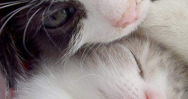 Cat's Baby Cats cute cats| http://babycatskatrine.blogspot.com