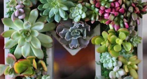 Vertical Succulent Garden Monogram... kinda cool way to include nature into crafts!