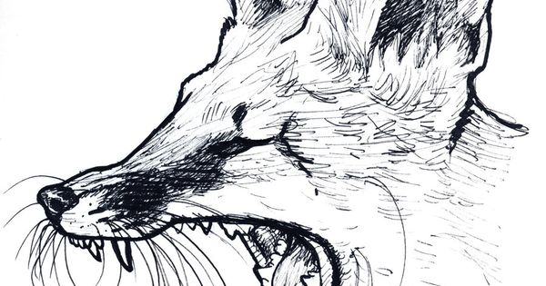 how to draw a fox walking