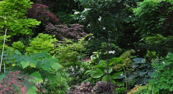 Throughout the garden, and especially along its outer perimeter, mature trees cast
