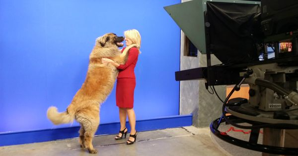 It S Quot Take Your Dog To Work Day Quot And Kris Crocker S