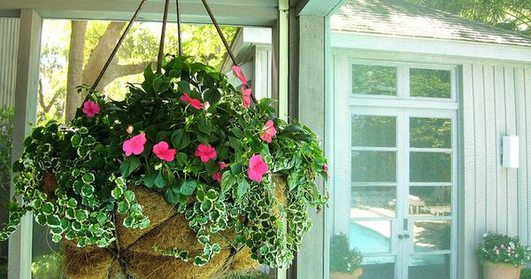 Hanging Flower Baskets Seattle : Screen porch hanging basket gardening containers and