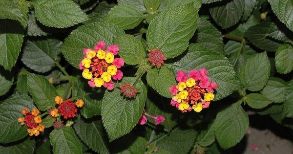 List Of Perennials Which Bloom All Year Year Round