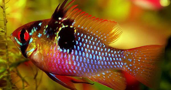 Increase Or Decrease Freshwater Aquarium Ph Naturally Tropical Fish Aquarium Tropical Freshwater Fish Freshwater Fish